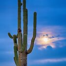 Giant Saguaro Cactus Golden Cloudy Full Moonset by Bo Insogna