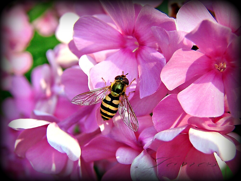 """Landing In The Pink"" by Gail Jones"