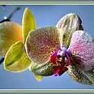 Orchid by Maj-Britt Simble