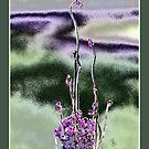 Purple flower by Maj-Britt Simble