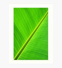 Banana Leaf Sabre Kunstdruck