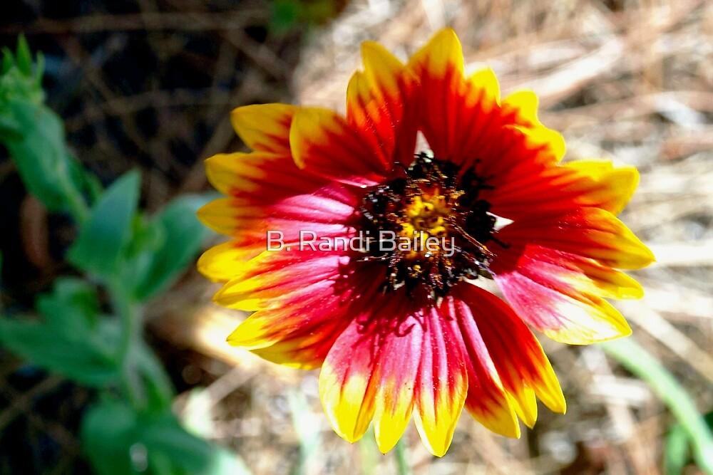 Eye-catching flower by ♥⊱ B. Randi Bailey