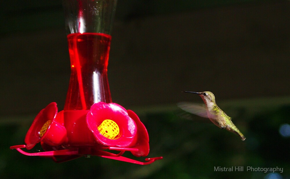 Hovering for Nectar by Mistral Hill  Photography