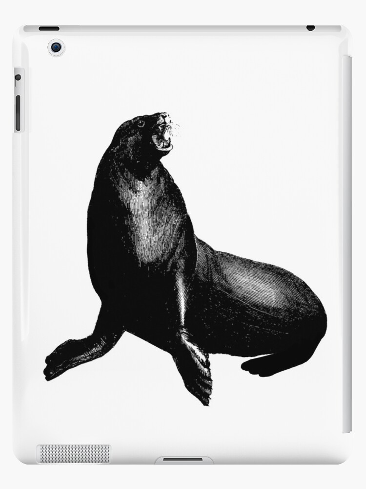 Angry Sea Lion by RedPine