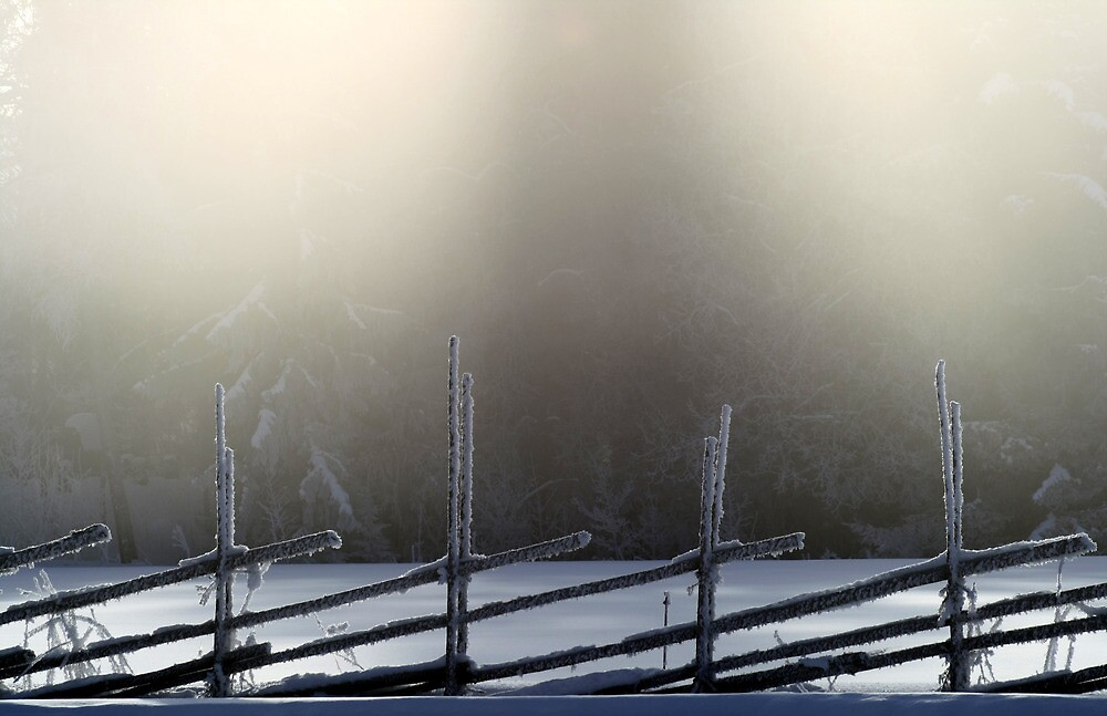 25.2.2013: Old Fence, Winter Morning by Petri Volanen