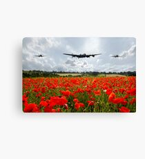 Poppy Flypast Canvas Print