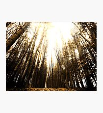 Sunlight through the Forest Photographic Print