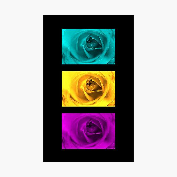 3 Roses Photographic Print