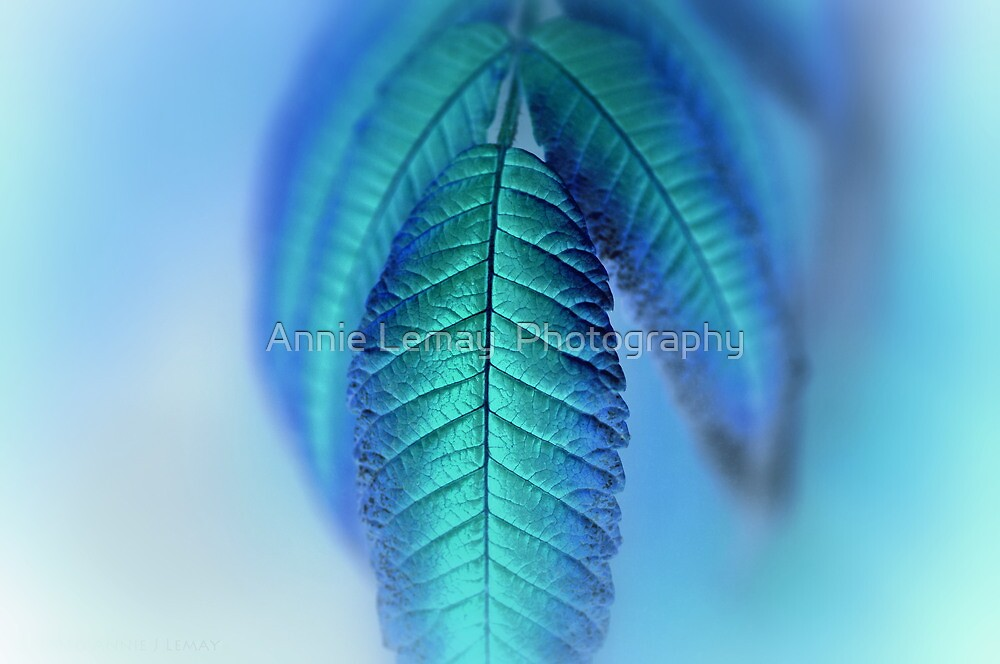 Blue by Annie Lemay  Photography