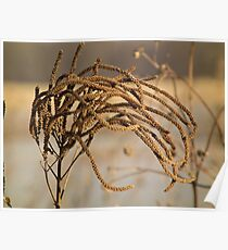 Graceful Curves At Sweet Marsh Poster