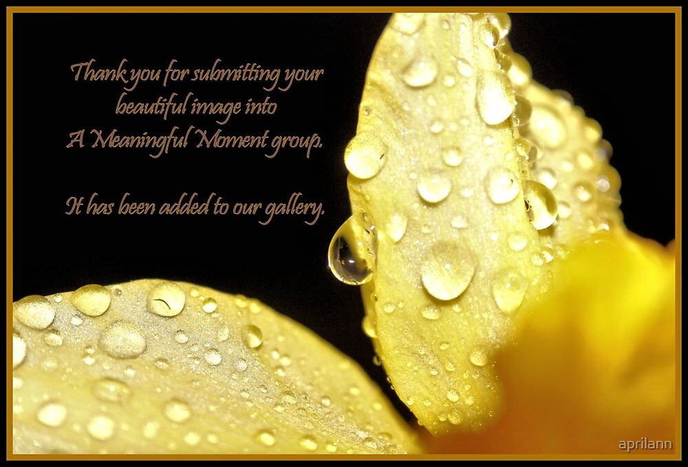 Banner - AMM - Thanks for Submitting Image by aprilann