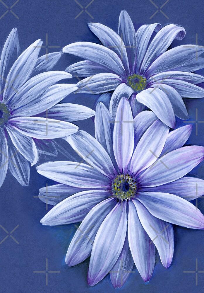Daisy osteospermum  by Sarah Trett