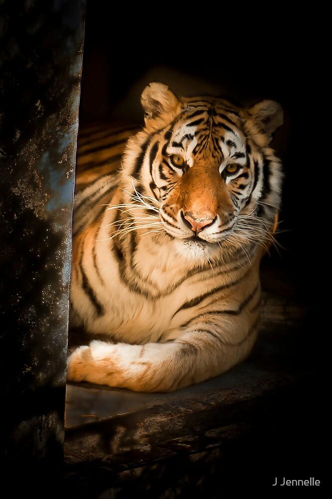 Lila The Tigress by Joe Jennelle