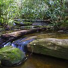 Irrawong Reserve Warriewood NSW by Doug Cliff