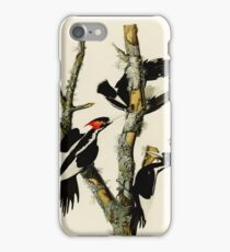 Audubon's Ivory Billed Woodpeckers iPhone Case/Skin