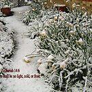DAFFODILS IN THE SNOW/BIBLE VERSE by Shoshonan