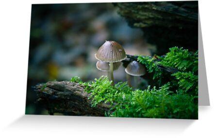 WoodLandScape,Hardwick Heath,Bury St Edmunds by Suffolk Photography