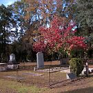Autumn in Southern Cemetery by Michael McCasland