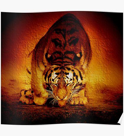 Tiger sunrise Poster