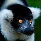 Black & White Lemur by Stuart Robertson Reynolds