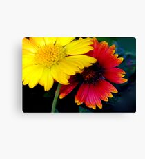 Yellow and red impact Canvas Print