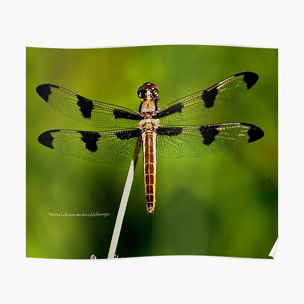 Dragonfly of the enchanted forest by Yannis Lobaina  Poster