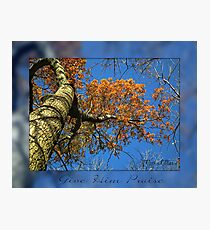 Giving thanks Photographic Print