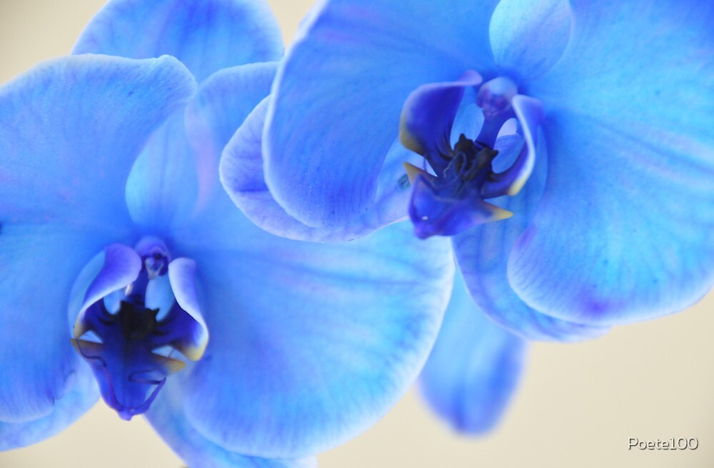 Blue Mystique by Poete100