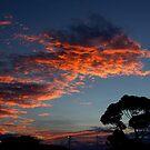 lodden sunrise by fazza