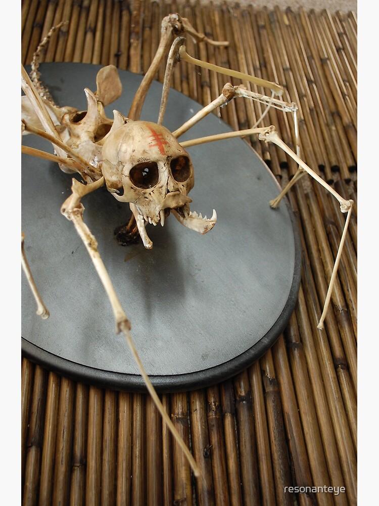 spider monkey taxidermy photograph by resonanteye