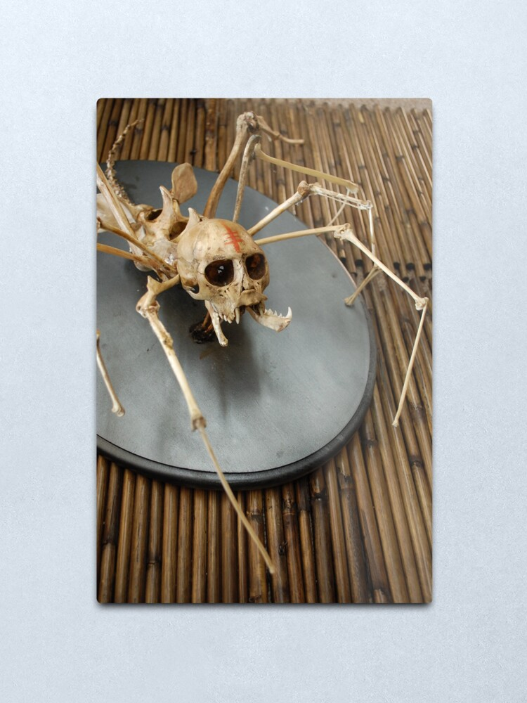 Alternate view of spider monkey taxidermy photograph Metal Print