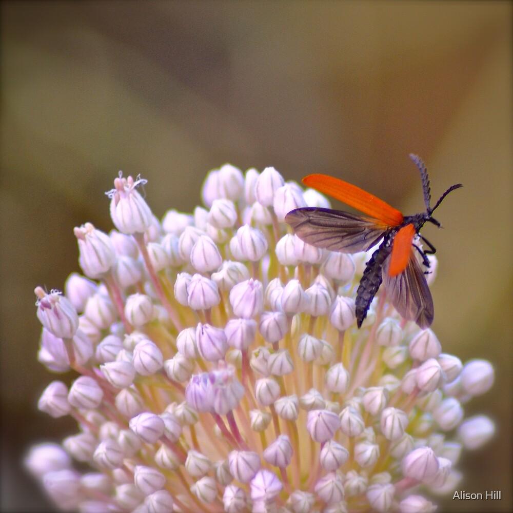 Taking Flight - Lycid Beetle on Leek flower by Alison Hill