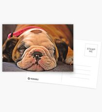 Sleeping puppy Postcards
