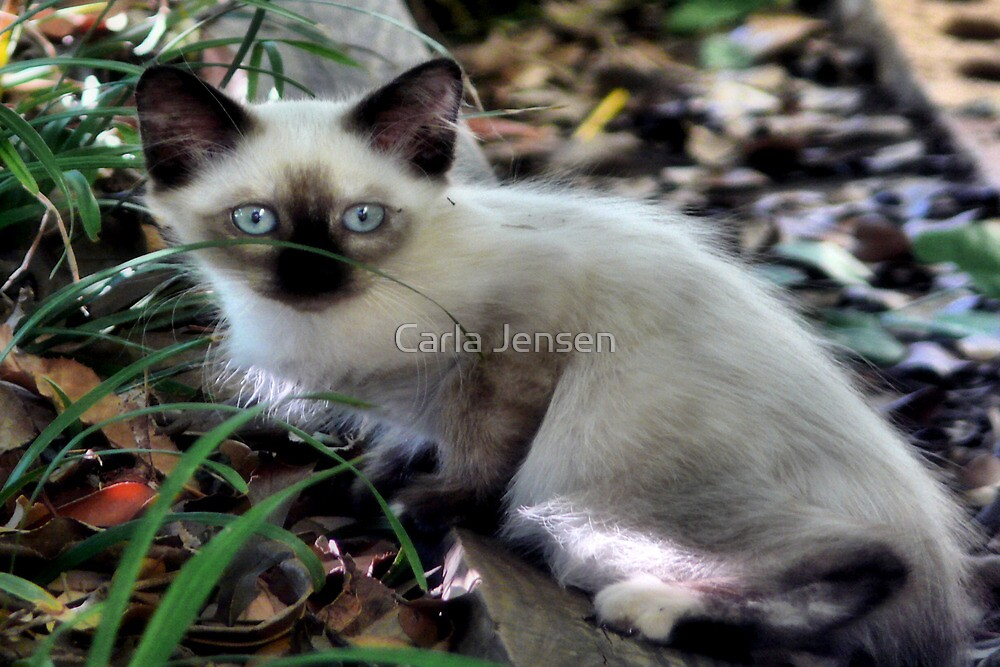 Little Blue eyes by Carla Jensen
