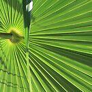 palm leaf by anfa77
