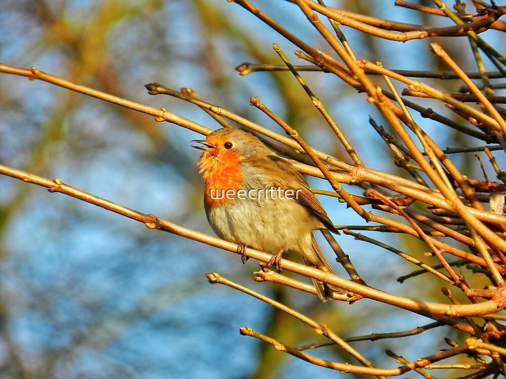 Singing in Dunfermline Glen by weecritter