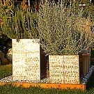 Herbs In A Tuscan Garden by Fara
