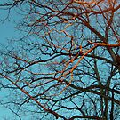 Golden Branches Against a Turquoise Sky by Jane Neill-Hancock