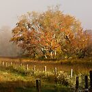 Cades Cove, fall 2012 by Douglas  Stucky