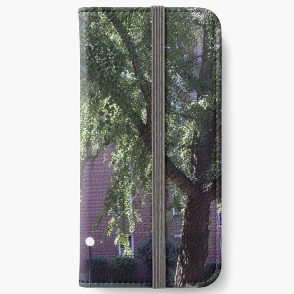 Leaves of trees pierced by a sunbeam iPhone Wallet