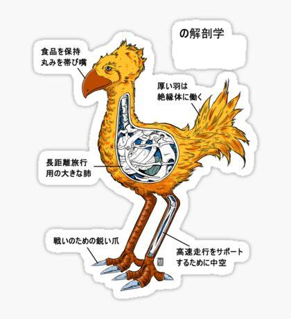 Anatomy of a flightless bird Sticker