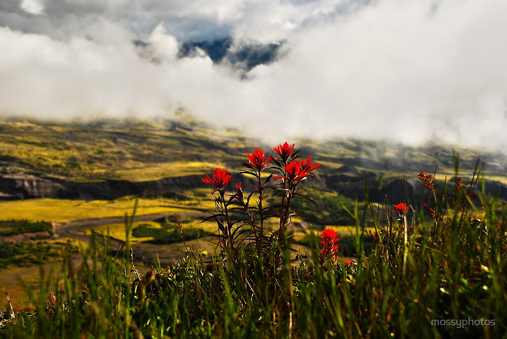Indian Paintbrush by mossyphotos