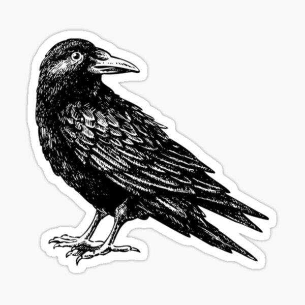 Raven ( crow ) Sticker