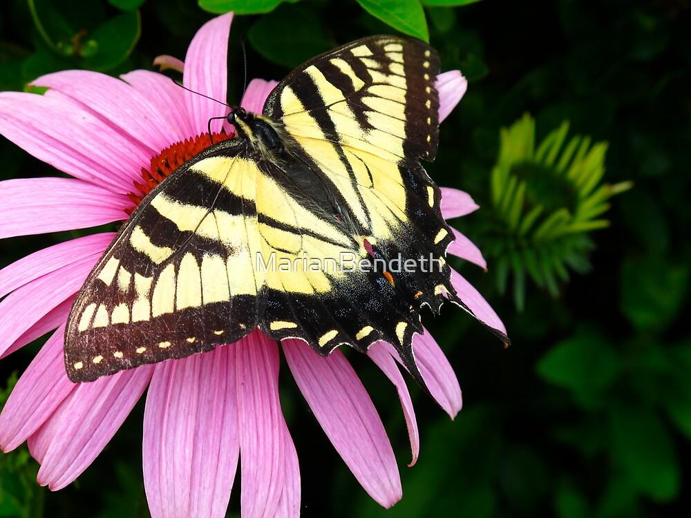 Open wings, open heart by MarianBendeth