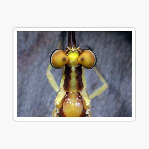 Mayfly's Top Eyes Sticker