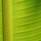 Banana leaf by heinrich