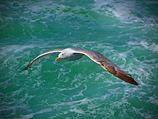 Seagull Brighton by Colin  Williams Photography