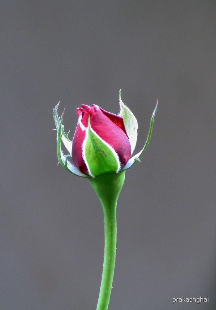 First Love by prakashghai