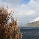 Looking Over the Lake by NinaJoan