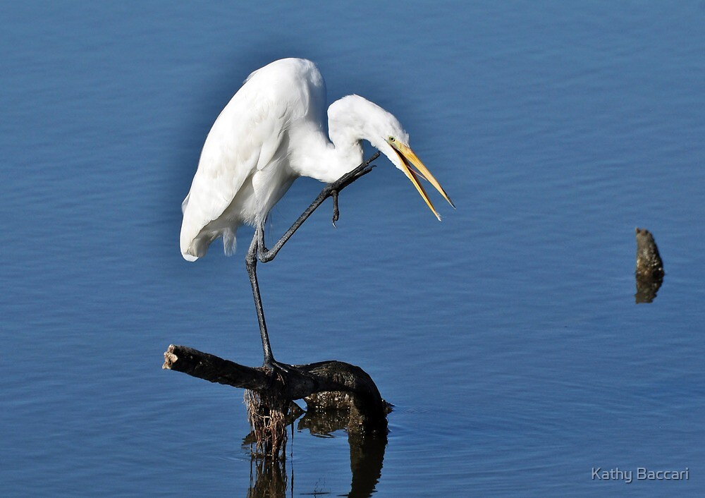 Chillin' Great Egret by Kathy Baccari